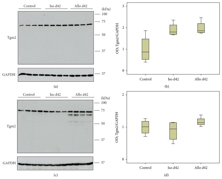 anti gapdh antibody (a85382) antibodies comfigure 2 mediators inflamm 2015;2015 429653 doi 10 1155
